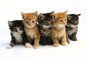kittens-main_Full